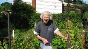 Kay Ferguson, 88 yrs old, June 2008. Picking raspberries.