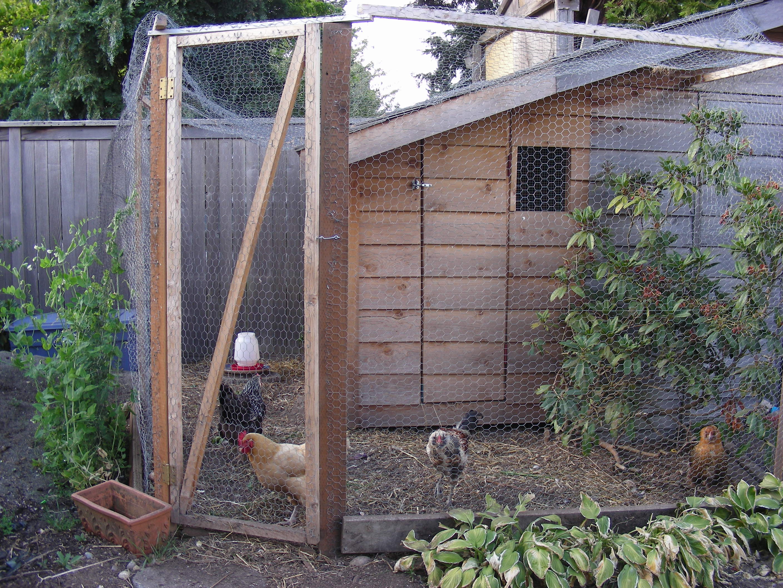 backyard chickens grandmabetsybell