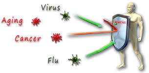 immune system3